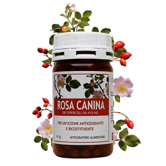 Rosa Canina - 100 opercoli